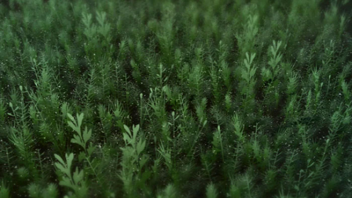 swaying 2D animated moss leaves lives in a 3D animated environment : by disko ferdi